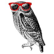 TH HipsterOwl